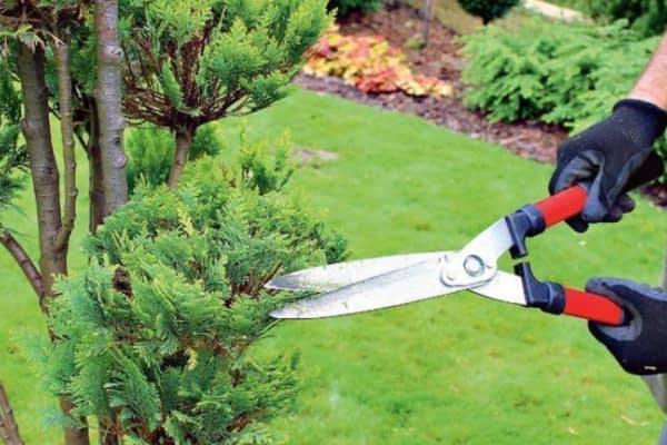 Kalendarz cięcia drzew i krzewów na cały rok